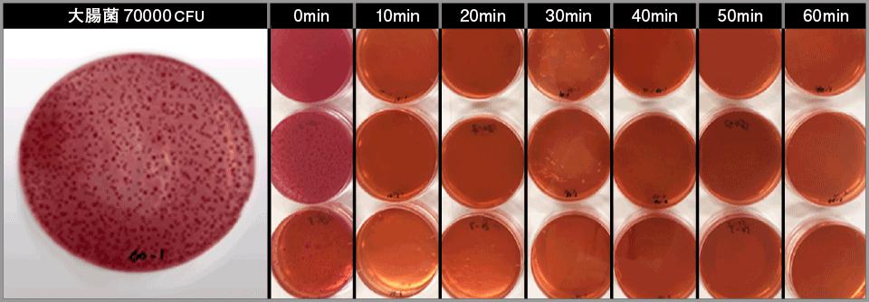大腸菌試験観察状況