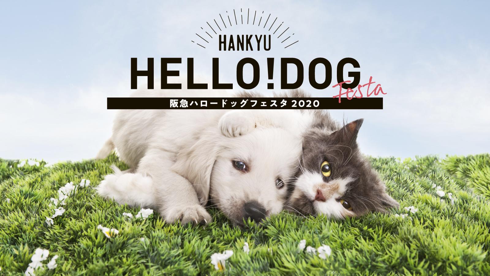 ミラブル体験イベント:阪急ハロードッグフェスタ2020