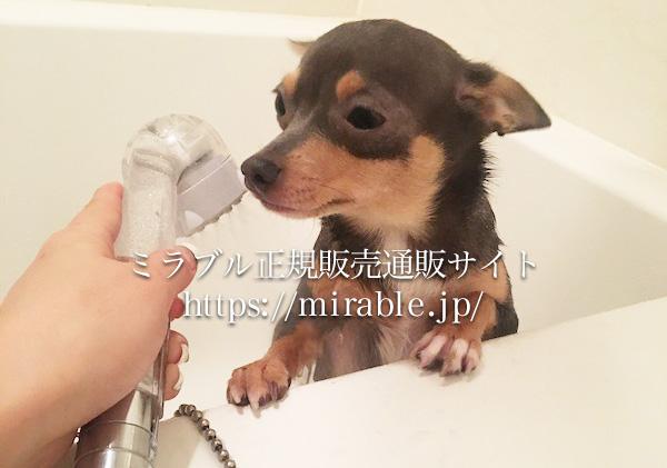 ミラブルを浴びる犬