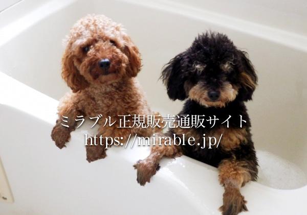犬がシャワーを嫌いな理由