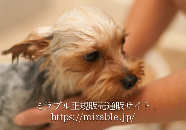 塩素除去機能で犬のお肌にも優しい