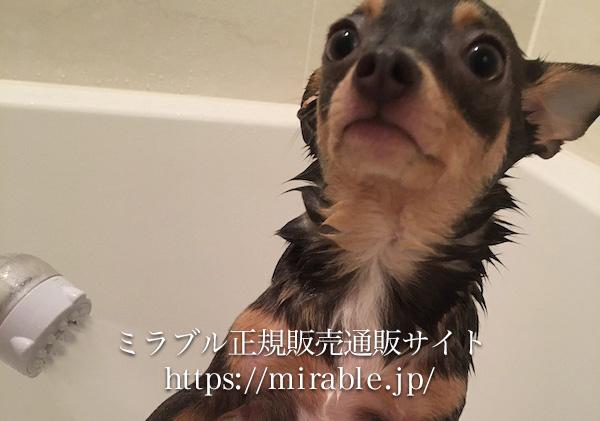 愛犬も心地よいミストシャワーでおとなしく